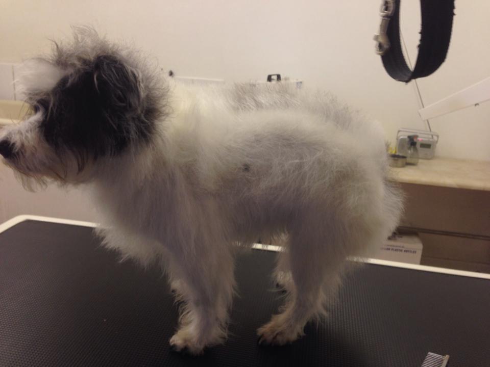 Zara after bath